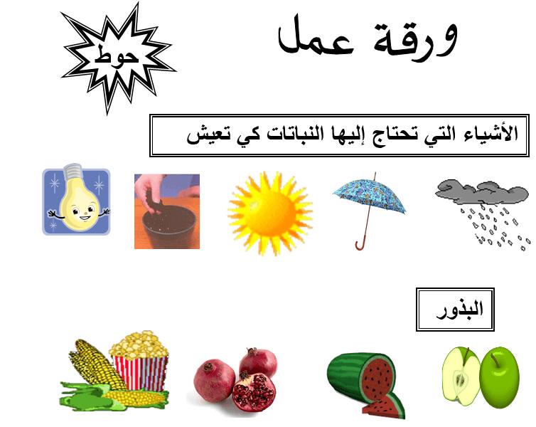 اجزاء النباتات
