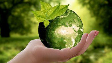 صورة عبارات عن البيئة